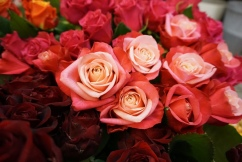 "Rosensorte ""Wildberry"""